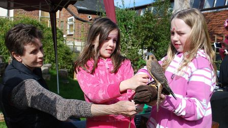 Children enjoy the bird display at the 2015 Early May Bank Holiday weekend at Grapes Hill Community