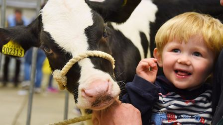 Ayrton Burridge, two, of Fundenhall, with one of his dad's 46-day-old Holstein calf at the Spring Fl