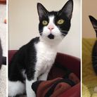 Cats waiting to be rehomed at RSPCA East Norfolk. Photo: RSPCA East Norfolk