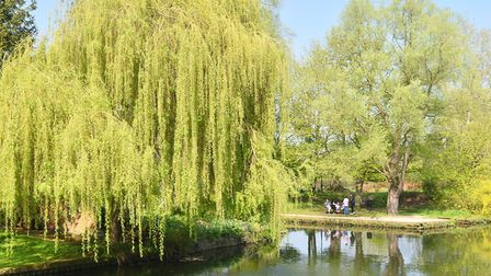 Spring weather along the river in Norwich. 2017. Byline: Sonya Duncan Copyright: Archant 2017