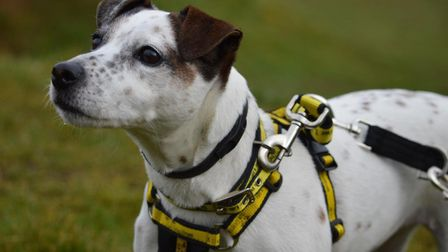 If you are interested in offering Willow a loving home, please call Dogs Trust Snetterton on 03003 0