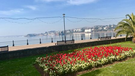 Flowers add a splash of colour to Torquay seafront