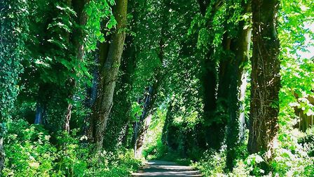 An archway of trees from Shiphay Lane up to Torbay Hospital