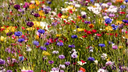 Wild flowers in Torquay. Photo: Shot by Rob