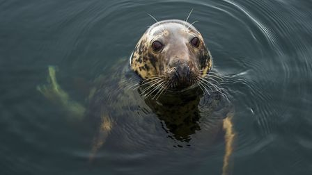 Follow the Torbay-based �The Seal Project� on Facebook