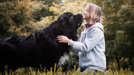 Walking - such a key part of good dog ownership - is known for its physical, therapeutic and de-stre