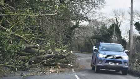 A tree down causes hold ups on a road after Storm Fionn.Byline: Sonya DuncanCopyright: Archant 2018