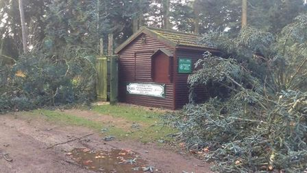 The site at Lynford Arboretum, Thetford Forest, which has been damaged by winds. Picture: Thetford F