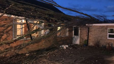 The damage caused by a tree falling on a bungalow in Brandon. Picture: Stephen Eke