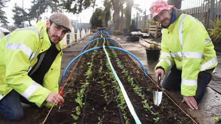 Craig Hutchison, left, and Duncan Townend, at work at This (The Horticulture Industry Scheme) at The