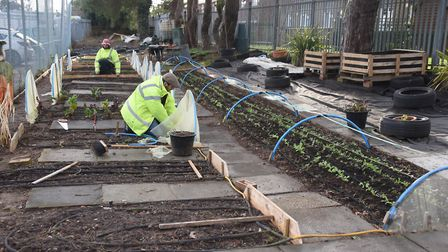 Craig Hutchison and Duncan Townend, at work at This (The Horticulture Industry Scheme) at Thetford.
