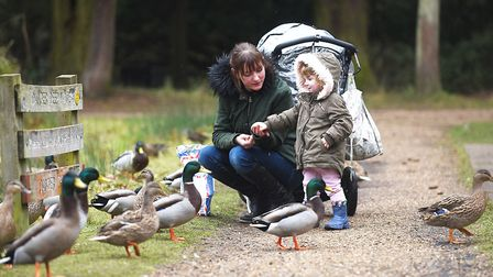 Kimanya Randall and her two year-old daughter Emily feeding the ducks at Brandon Country Park. Pictu