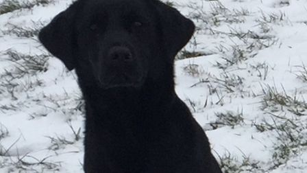 Bess the Labrador has been missing from her Brandon home since March 4. Picture: Lee McKay