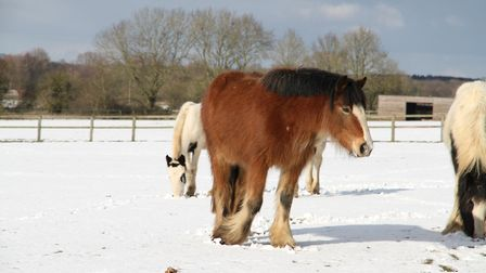 Nettle with friends at a wintry Hall Farm. Picture: World Horse Welfare