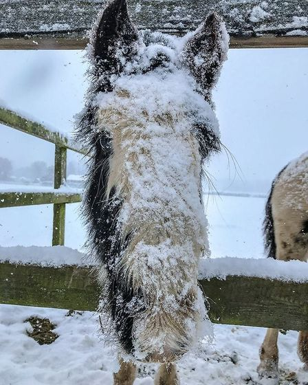 Snowy face pony at Hall Farm. Picture: World Horse Welfare