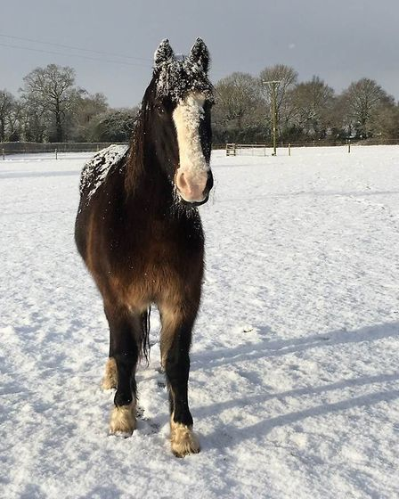Samson in the snow at Hall Farm in Snetterton. Picture: World Horse Welfare