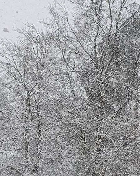Snow on the trees. Picture: Gemma Taylor