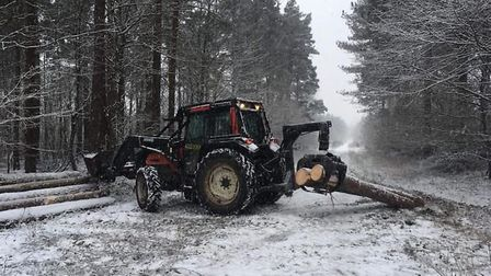 Forestry Commission staff hard at work in Thetford Forest. Picture: Forestry Commission