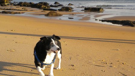 Alena and Dylan Wren's adopted dog Kingston, who died last year. Picture: Dogs Trust