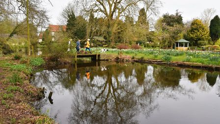 Daffodil Island opens to the public in Thetford.Visitors enjoy the spring sunshine.Byline: Sonya Dun