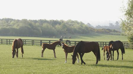 Mares and foals at Shadwell Stud. Picute: Richard Lee