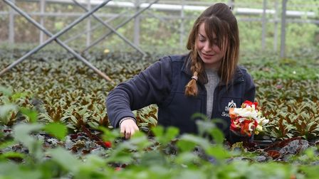 Some of the many people who work on Shadwell Estate.France Pilcher, gardener.Byline: Sonya DuncanCop