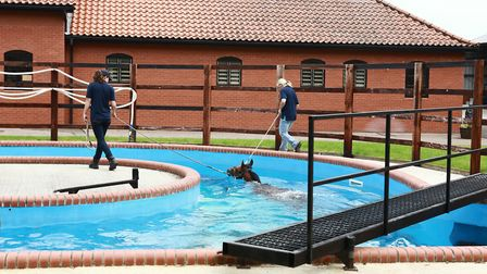 A horse in the swimming pool of the rehabilitation area of Shadwell. Picture: Asuncion Pineyrua