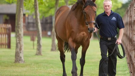 Stallion Nayef and his handler Ron Lott at Shadwell Stud. Picture: Chris Wilmott
