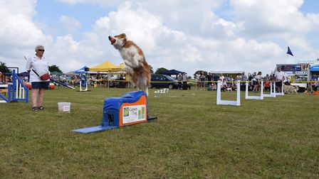 Dogs Trust Snetterton's annual Fun Day. Picture: Dogs Trust