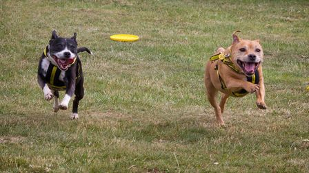 Stella and Bud are looking for their forever home together. Picture: Dogs Trust Snetterton