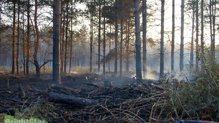 Damage caused following a fire at Thetford Forest in 2015. Photo by Brightstar Designs and Photograp