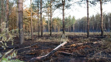 Damage caused following a fire at Thetford Forest in 2015. Photo by Brightstar Designs and Photogra