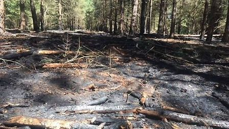 Fire damage from a blaze in Thetford Forest over the weekend of June 23 and 24. Picture: Forestry Co