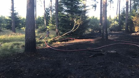 Firefighters tackle the blaze in Thetford Forest on Saturday. Picture: SUFFOLK FIRE AND RESCUE SERVI
