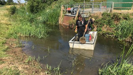 Around 2,000 fish were saved from the deoxygenated water Picture: Elliot Furniss