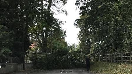 The tree blocking the road. Picture: Tommy Smith