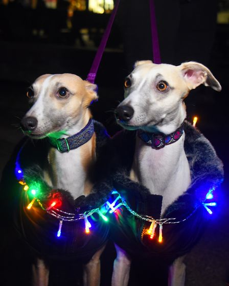 Dogs and their humans taking part in the Bark in the Dark in Thetford Forest. Show whippets, Mirka,
