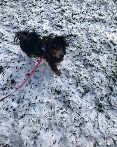 Pixie the pooch playing in the snow in Brandon. Picture: Marie Shead