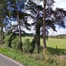 The field, owned by Shadwell Estate in Thetford, which could see 115 homes built. Picture: Google