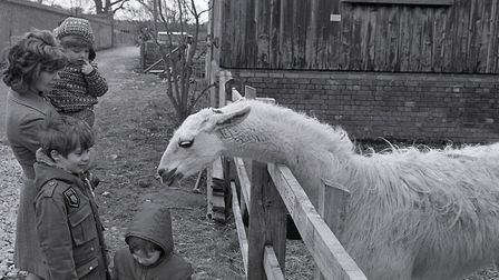 Opening of Kilverstone Wildlife Park, 1 April 1973. Photo: Archant Library