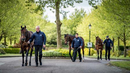 Shadwell Stud is hosting open days in the Summer. Picture: Shadwell Stud