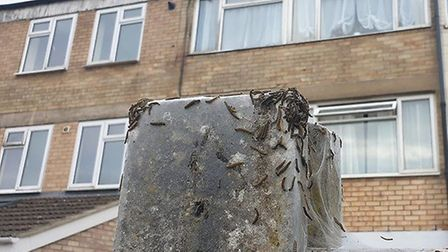The webs have been turning up in resident estates. Picture: Joao Sousa