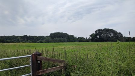The land that could be developed in Weeting. Picture: Archant