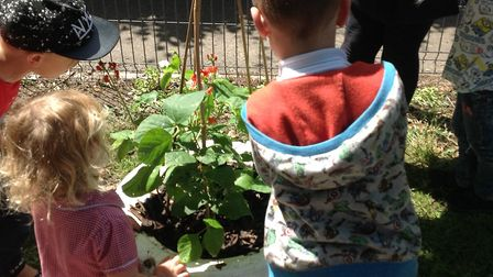 Marie Turner showing youngsters at Norwich Road Academy how to garden. Picture: thelivelycrew