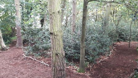 Volunteers from Thetford Conservation Group have created a new woodland walk in the town for the com