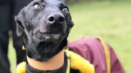 The Dogs Trust are reiterating that a dog is for life, not just for Christmas. Picture: Ella Wilkins