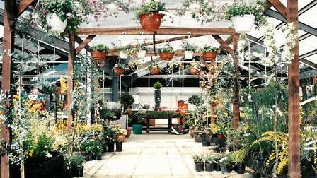 Thetford Garden Centre at its original site on Lime Kiln Lane from 1982 to 1992. Photo: Lucy Nixon