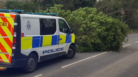 Breckland Police dealing with a fallen tree on Norwich Road, Thetford. Picture: Breckland Police