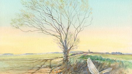 A painting of a barn owl in flight by artist John Hurst.