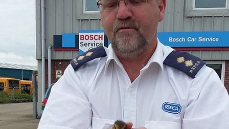RSPCA inspector John with the duckling after it was rescue.